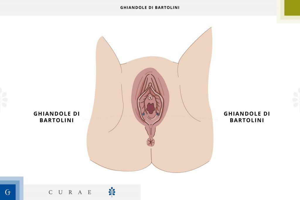 bartolinite