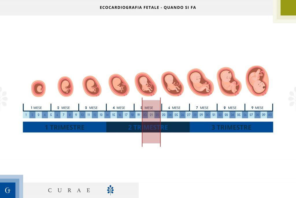 ecocardiografia fetale quando si fa